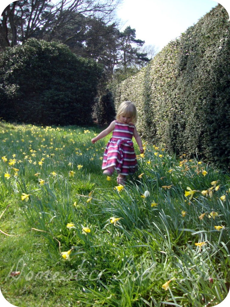 tiptoe through the daffodils