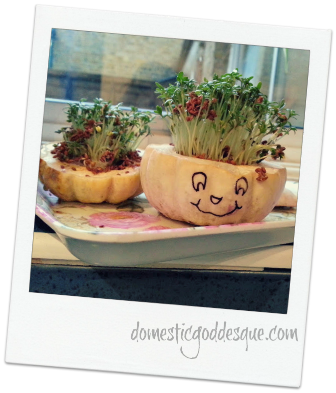 cress pumpkin heads