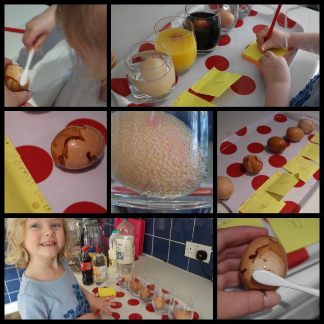 egg in vinegar experiment