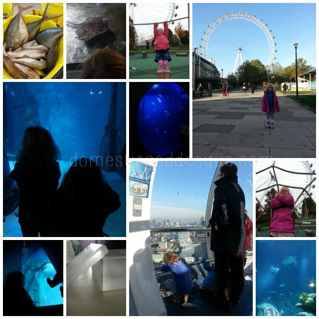 London Aquarium and London Eye review